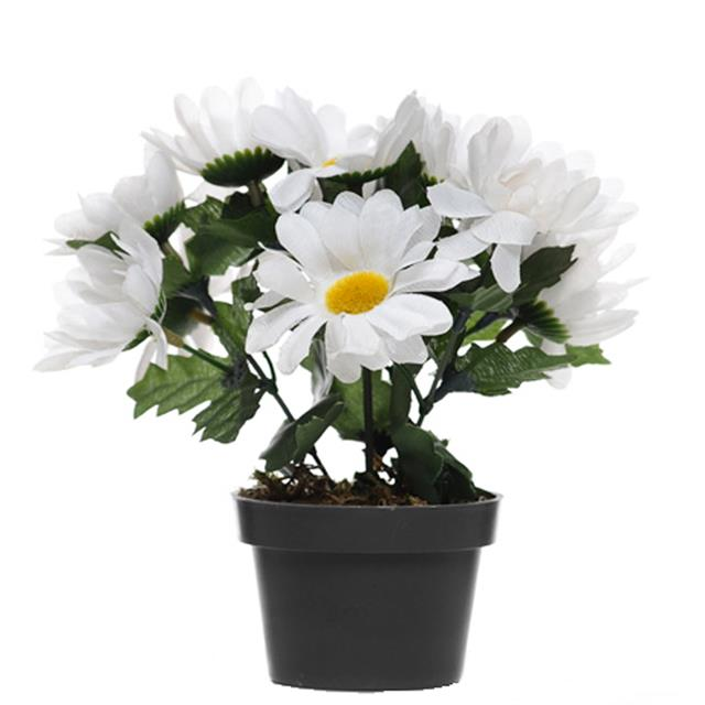 Artificial Small Potted Daisy Plant White Flowers