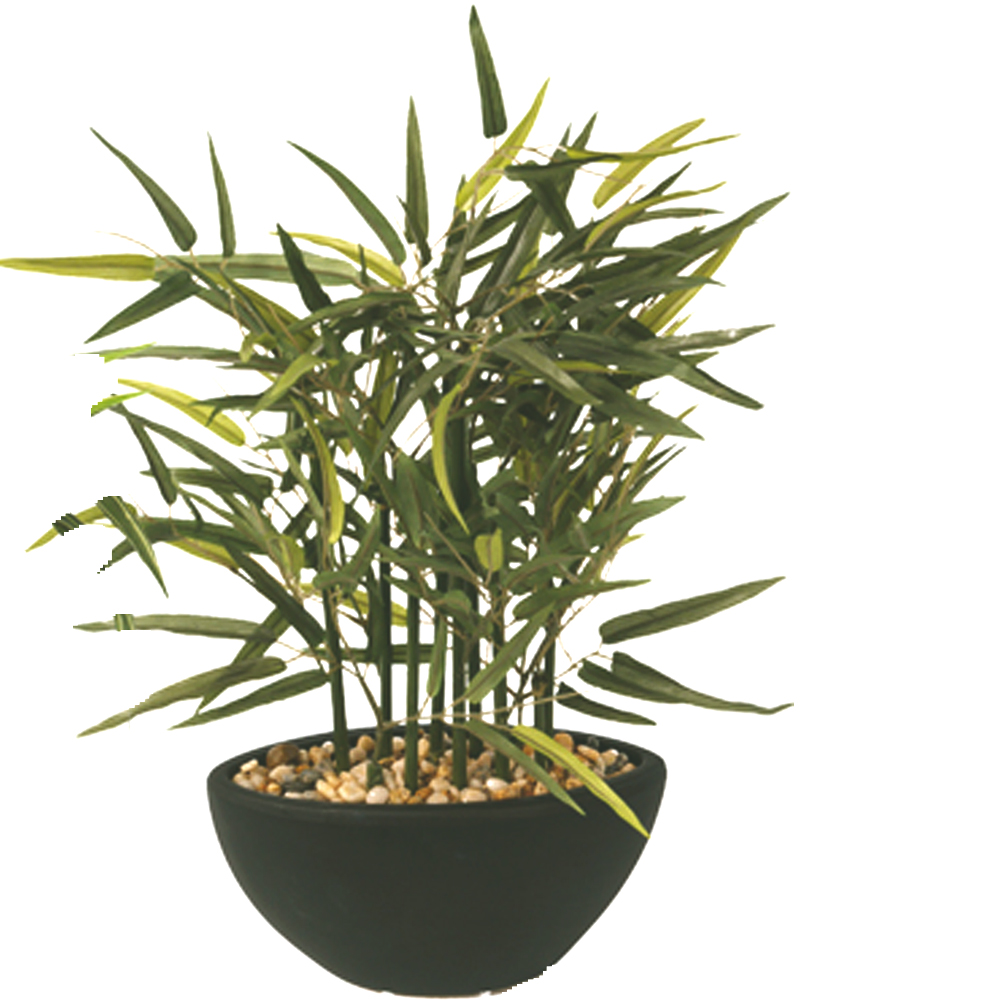 Tall Containers Plant