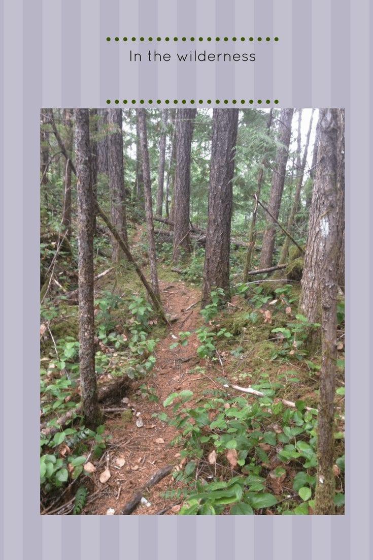 In The Wilderness – Devotional