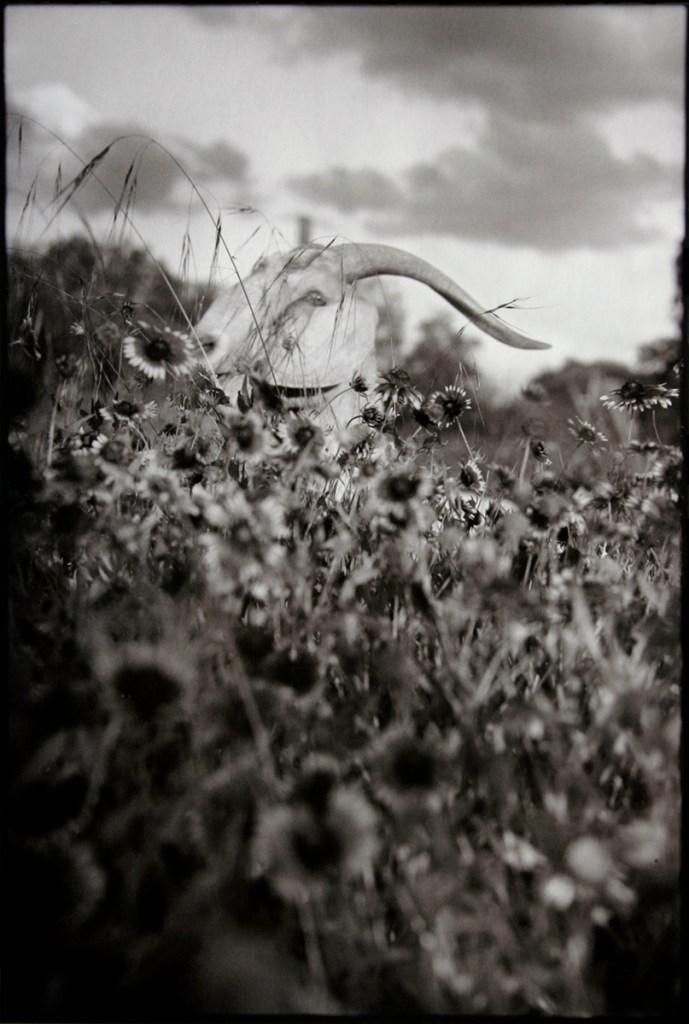 Snake Pasture, 2007