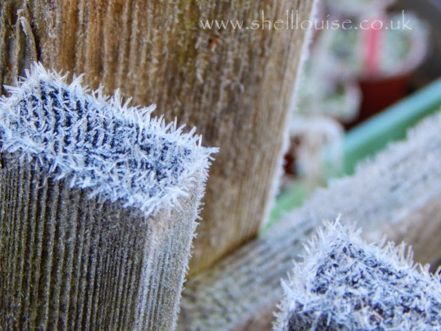 frost on the fence