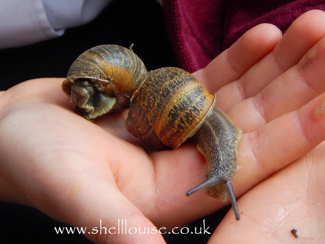 Snails on Ella's hand