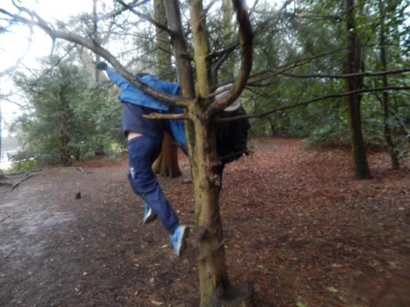 Jake climbing a tree at Hartsholme park