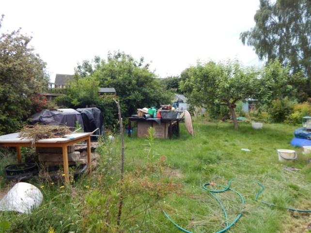 garden before - garden tidy