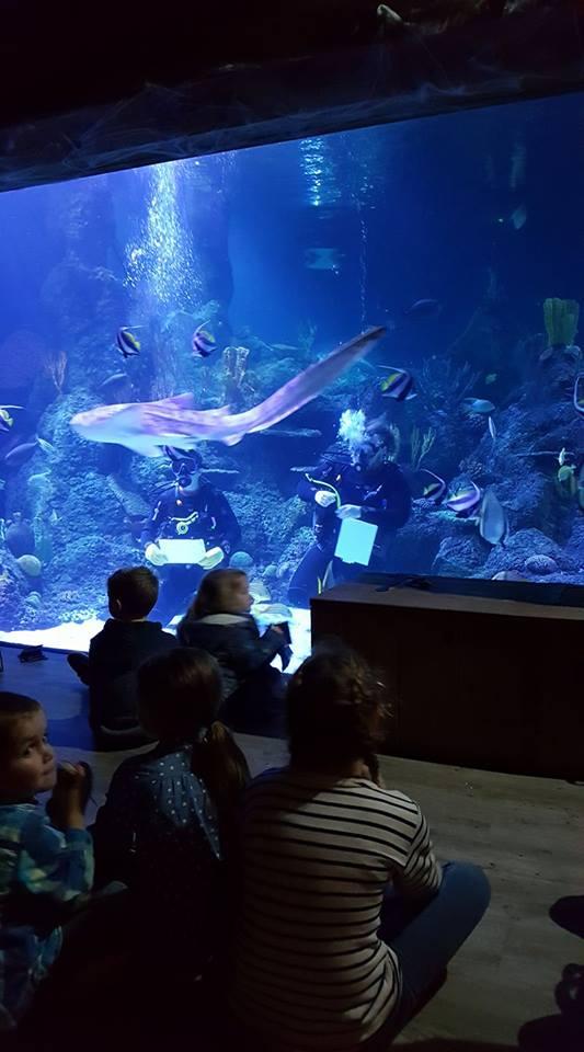 skegness-aquarium-015