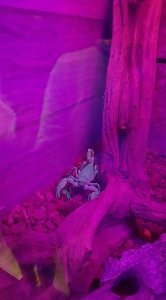 skegness-aquarium-02