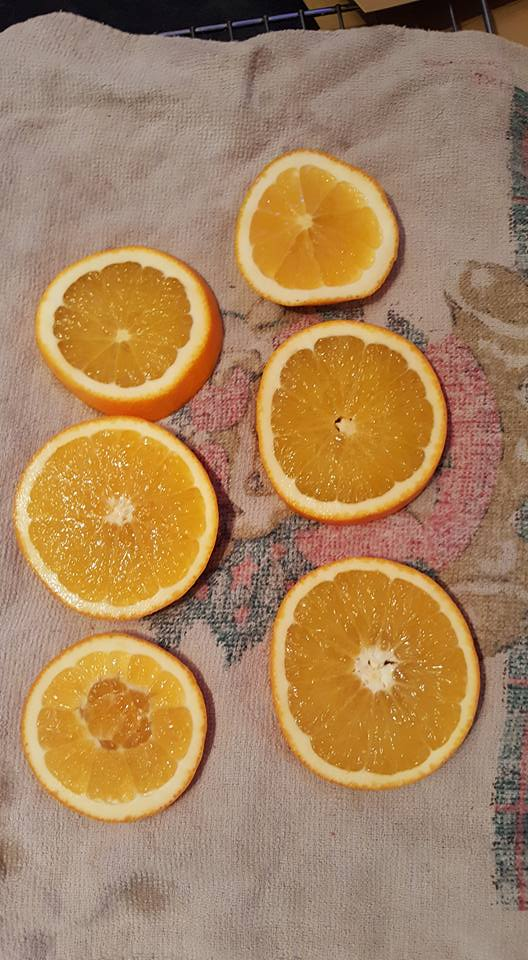 dried orange tree ornaments