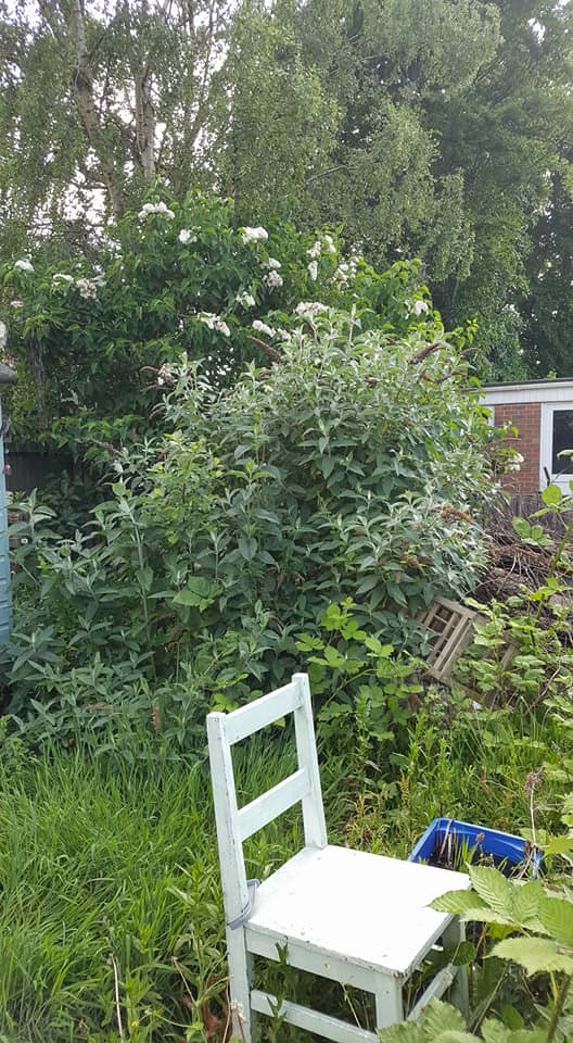 Gardening party - butterfly bush