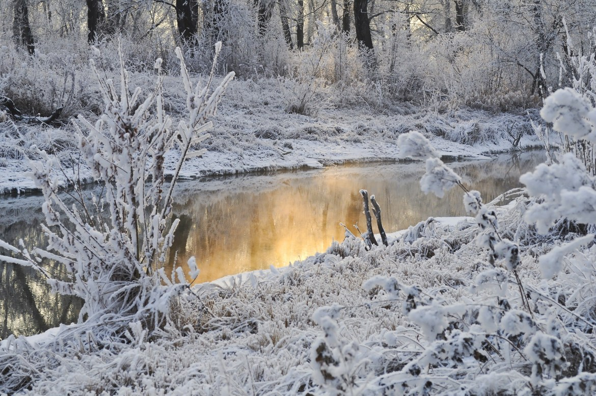 River and wood covered in snow