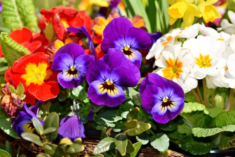flowers in the garden - declutter your garden
