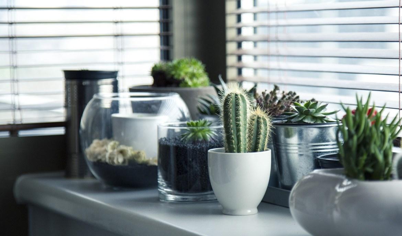 Indoor plants succulents and cactus
