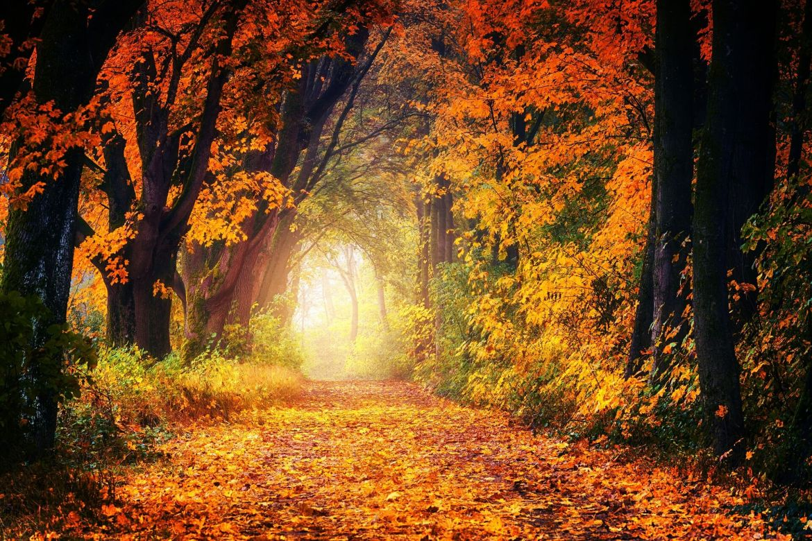 a wood in Autumn