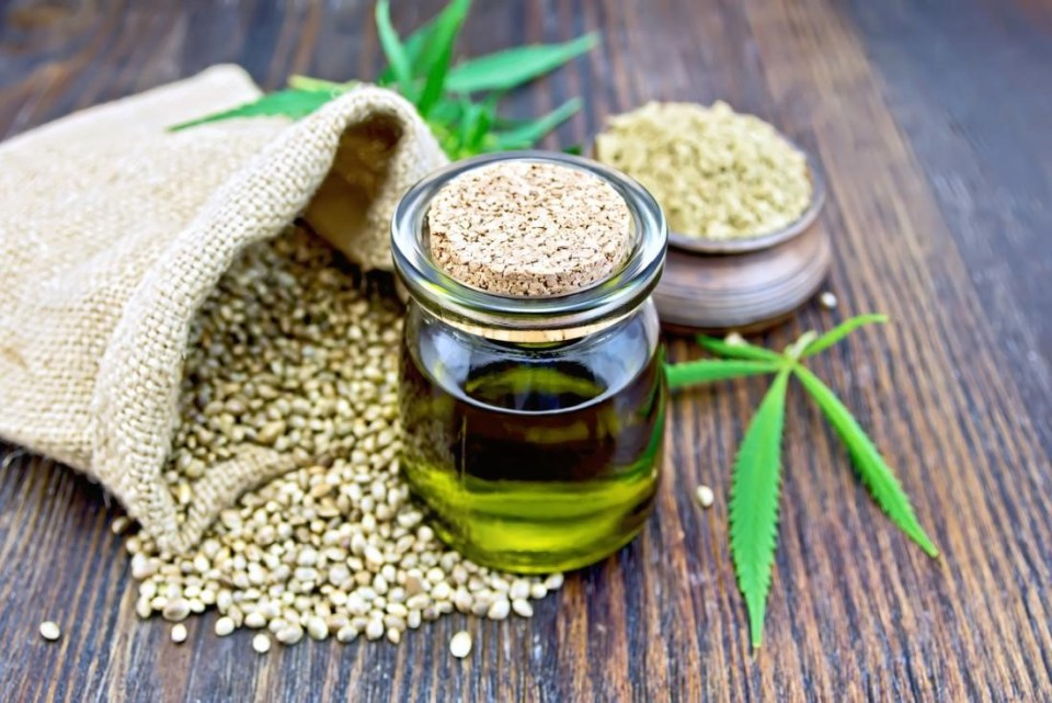 CBD oil for pets - is it safe?