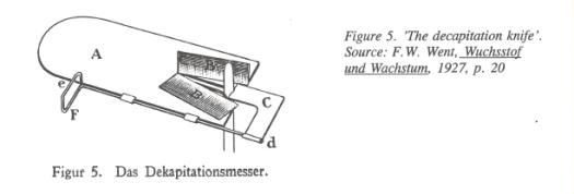 Fig2_Dekapitations
