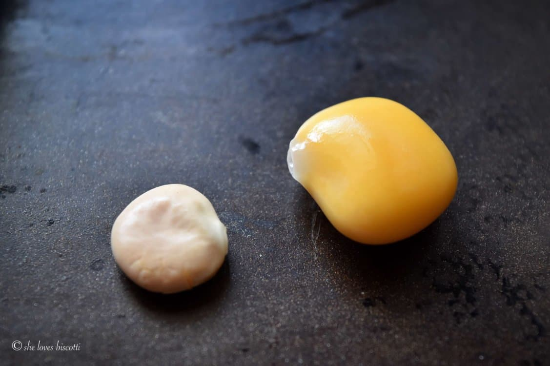 Comparing a dry and cooked Italian Lupini Bean