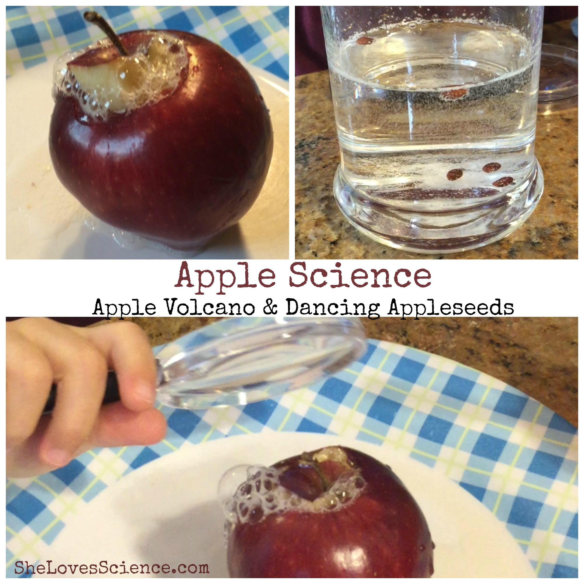 Simple Fall Experiments Apple Volcano And Dancing Appleseeds