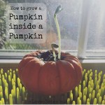 How to Grow a Pumpkin Inside A Pumpkin