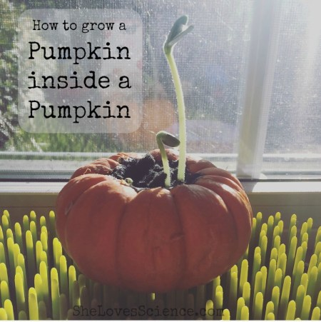 pumpkinpicmonkey