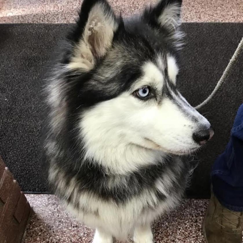 Lulu looking cute