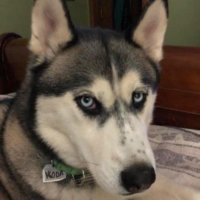 Koda looking cute