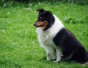 Inca von Dippoldiswalde