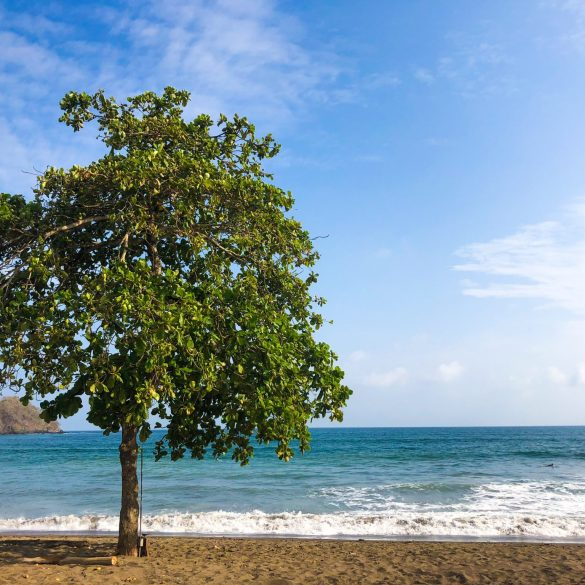 green-tree-on-beach-blue-waves-playa-venao-panama