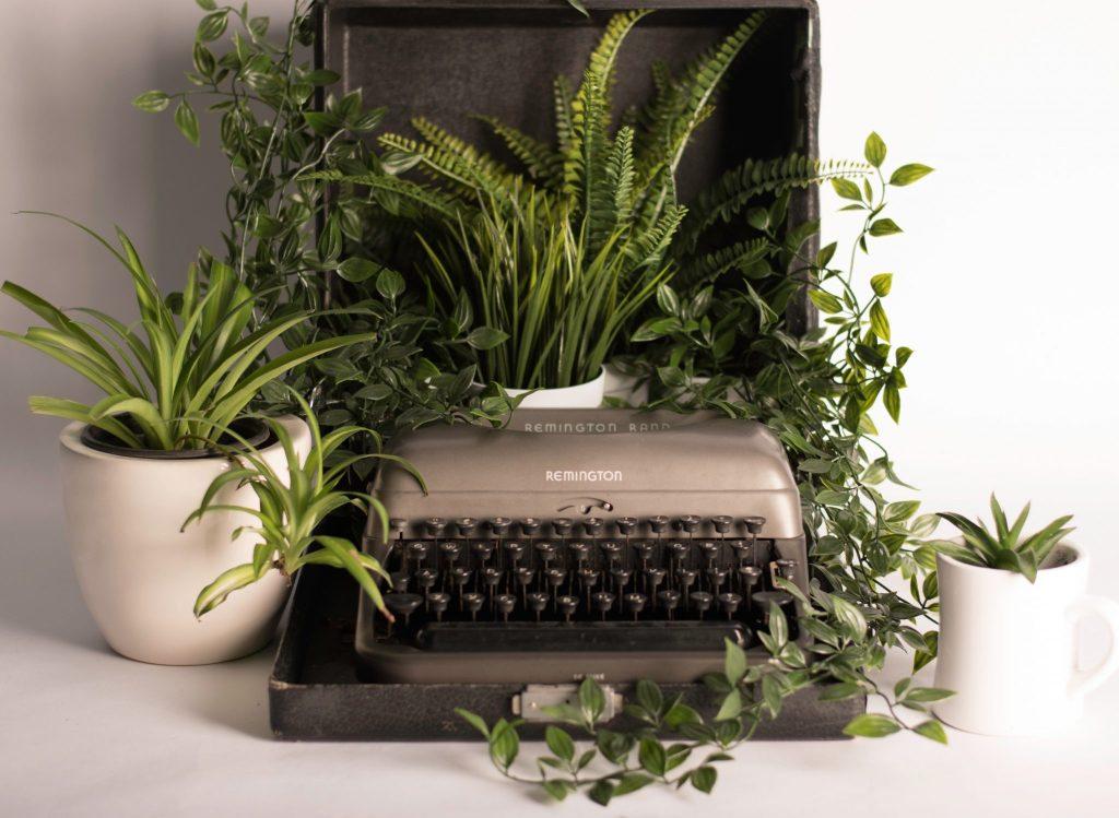 start writing typewriter with green plants