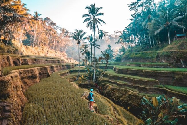 man standing in rice fields in Ubud Bali