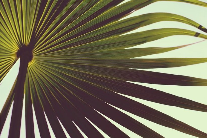 palm frond playa del carmen mexico
