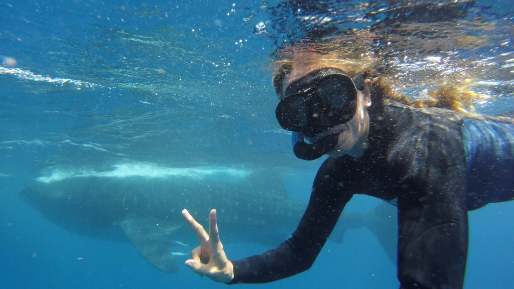 woman swimming with whale sharks in cancun peace sign