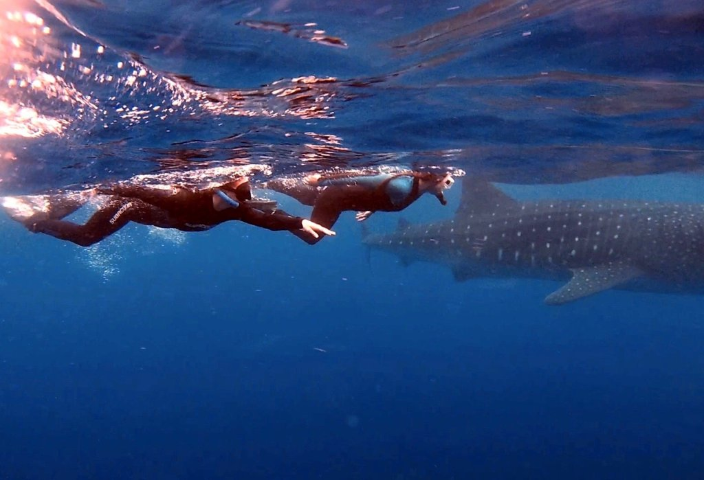 two women swimming with a whale shark in cancun mexico