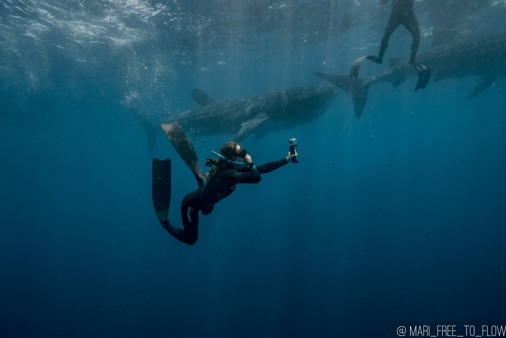 woman freediving with whale sharks and camera in cancun mexico