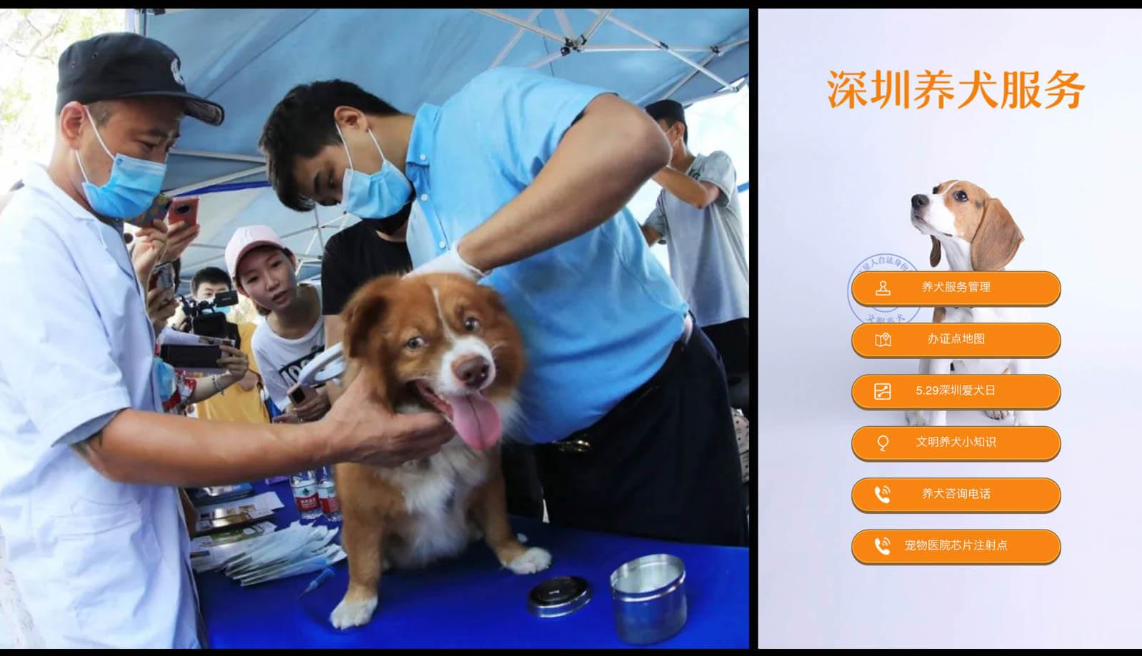 深センで10月より飼い犬のマイクロチップ埋め込み義務化:100の獣医院にて無料チップ埋め込み実施中