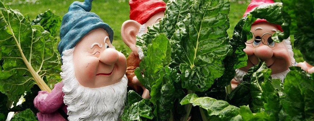 dwarves in garden