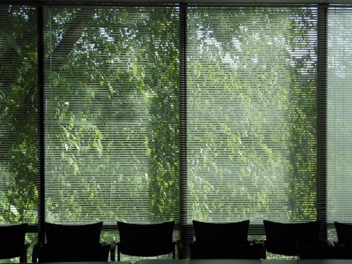 photo of windows in DeFriese conference room at the Sheps Center