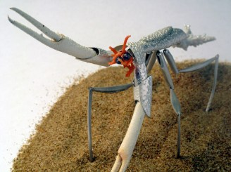 The Coral Mantis
