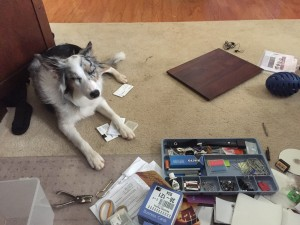 my-little-helper-getting-organized-at-home