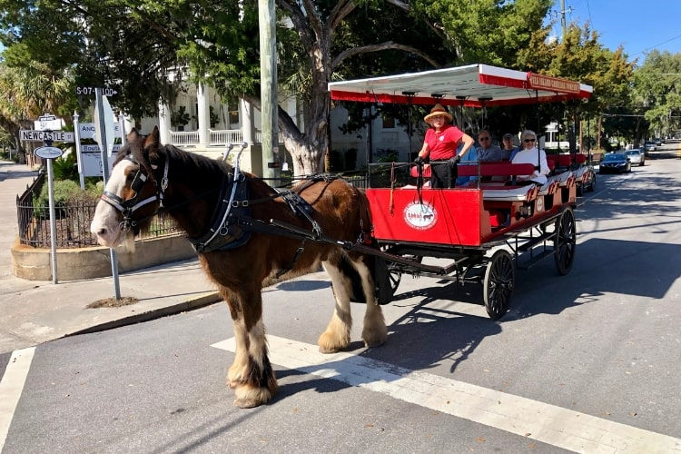 One good use of an hour in your 24 hours in blissful Beaufort, SC would be a carriage tour with Sea Island Carriage Company