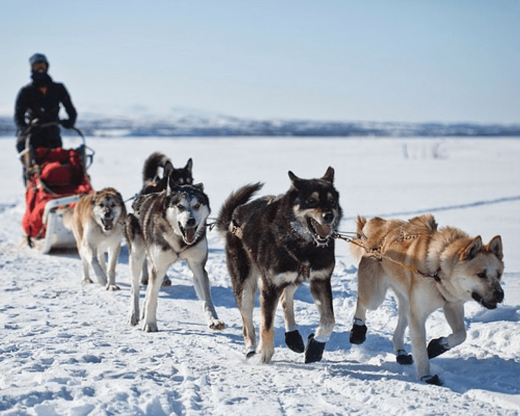 Ask what's the number one most talked about Alaska excursion, and dogsledding comes to mind.