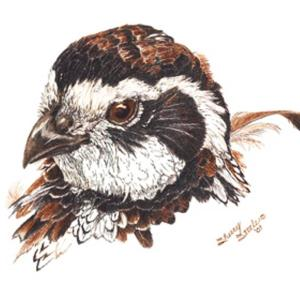 Sherry Steele Artwork - Bobwhite Beauty | Quail