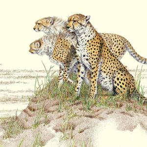 Sherry Steele Artwork - Final Exam | Cheetahs