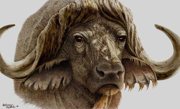 Sherry Steele Artwork - Gladiator   Cape Buffalo