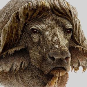 Sherry Steele Artwork - Gladiator | Cape Buffalo