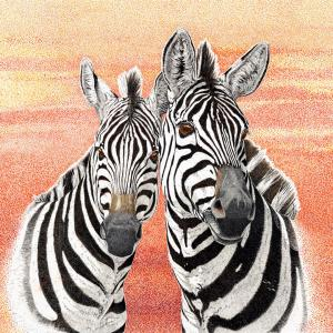 Sherry Steele Artwork - Just Me and My Gal   Zebras