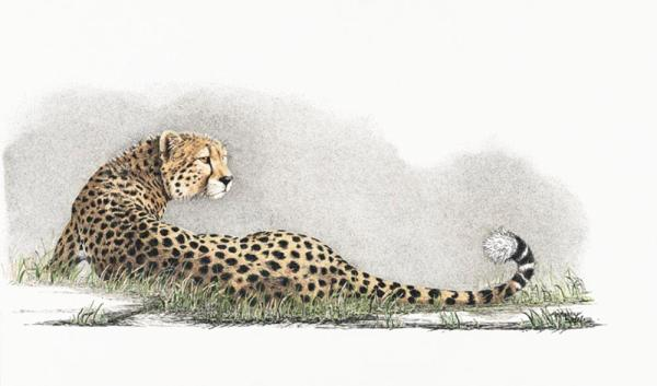 Sherry Steele Artwork - She Doesn't Know She's Beautiful | Cheetah