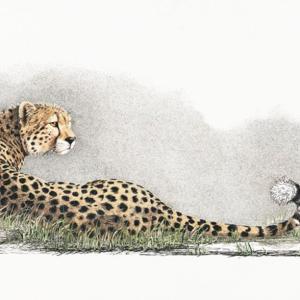 Sherry Steele Artwork - She Doesn't Know She's Beautiful | Cheetah