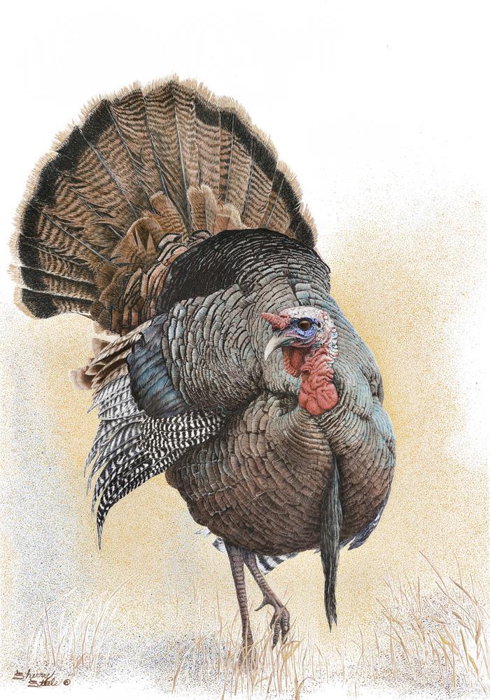 Something To Strut About | Turkey
