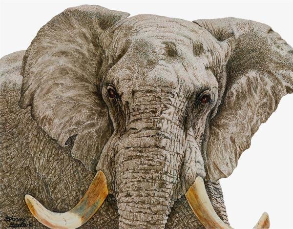 Sherry Steele Artwork - Ultimatum   Elephant