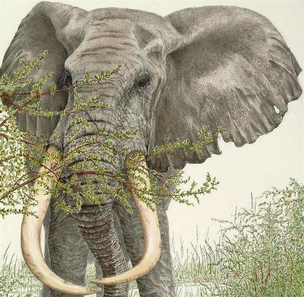 Sherry Steele Artwork - When There Were Giants Among Us   Elephant