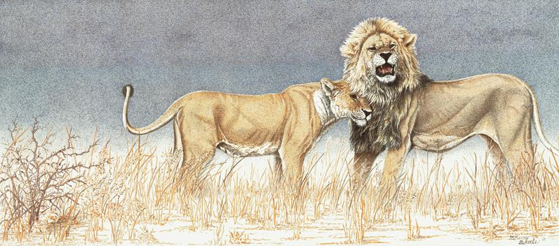 Conquest of a King | Lions